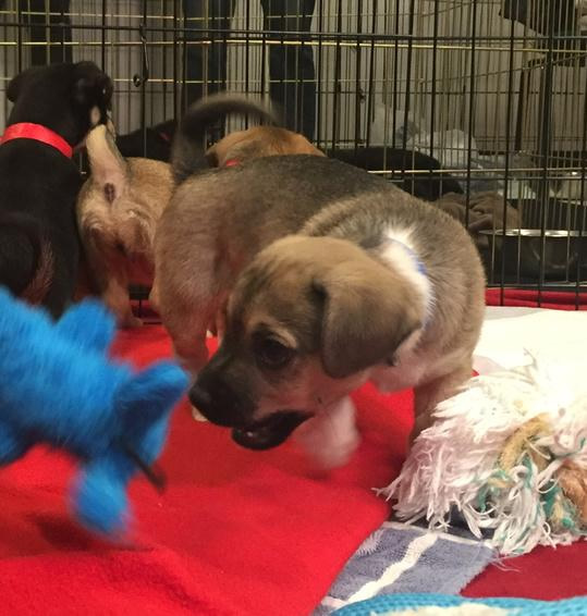 "<div class=""meta image-caption""><div class=""origin-logo origin-image kgo""><span>KGO</span></div><span class=""caption-text"">In honor of National Puppy Day on March 23, 2015, ABC7 News launched a big adoption event with our Perfect Pet partners. (KGO-TV/Kristen Sze)</span></div>"