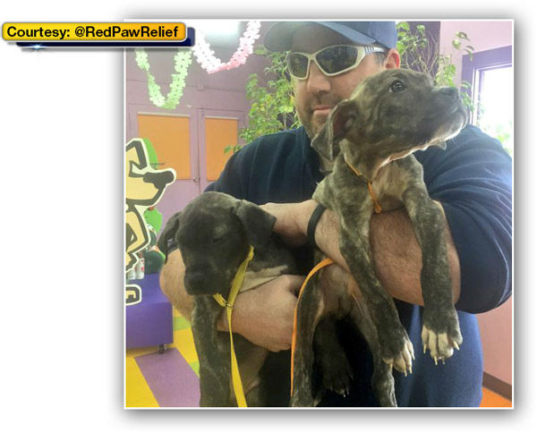 """<div class=""""meta image-caption""""><div class=""""origin-logo origin-image none""""><span>none</span></div><span class=""""caption-text"""">Philadelphia's Red Paw Emergency Relief team is celebrating National Puppy Day with their latest rescue pups. (WPVI Photo/ @RedPawRelief)</span></div>"""