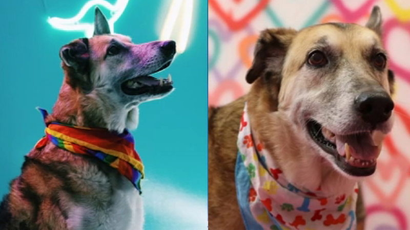 Dog Day Event At Galleria Has Photo Shoots For Dogs