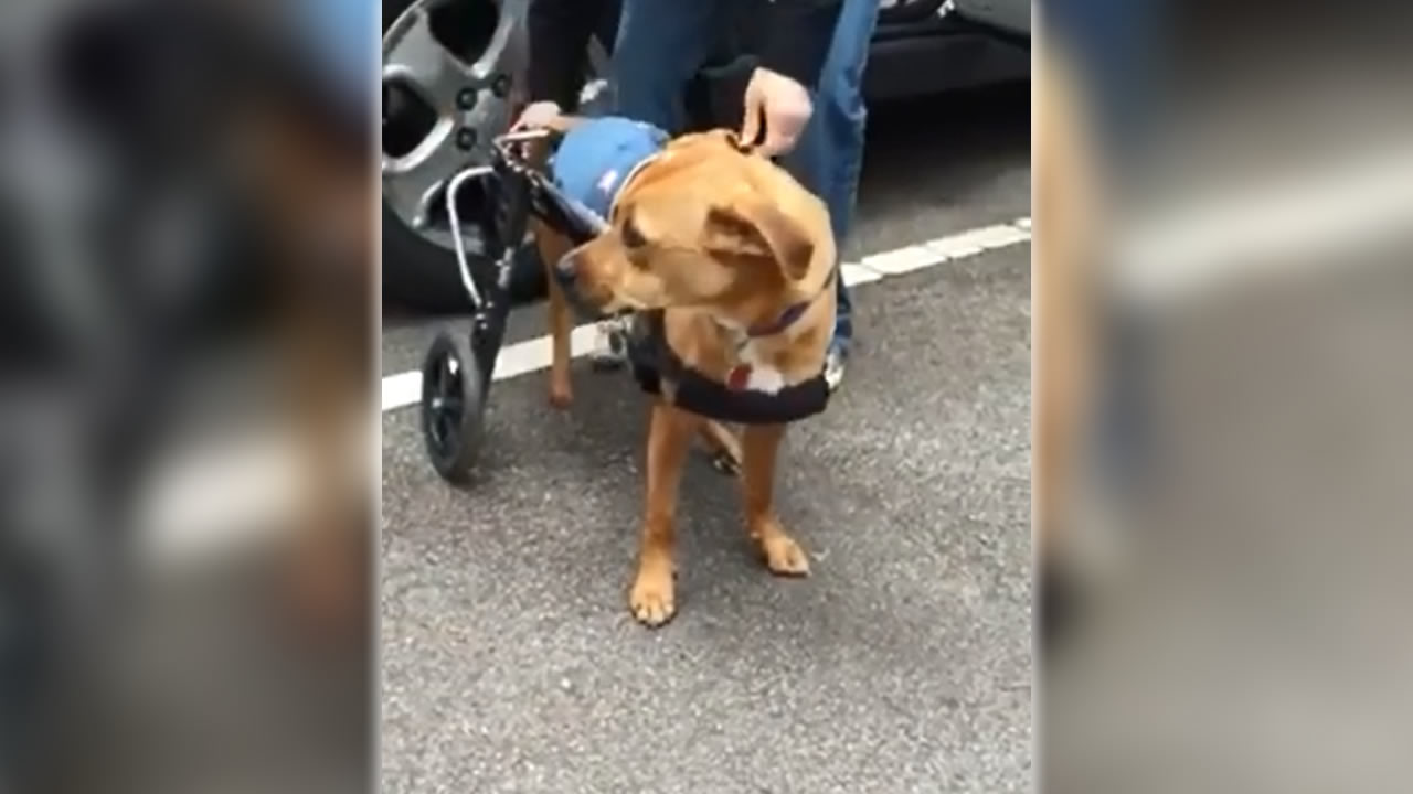 Oakley uses a wheelchair to get around