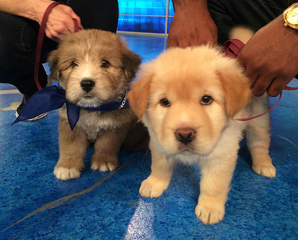 "<div class=""meta image-caption""><div class=""origin-logo origin-image none""><span>none</span></div><span class=""caption-text"">Sisters Gracie and Sophie play in the ABC7 studio for our 2nd annual Puppypalooza Adoption Event on Tuesday, March 24, 2015. (KABC)</span></div>"