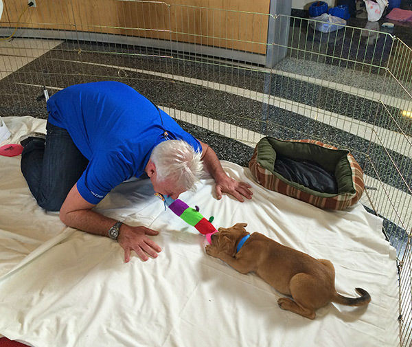 "<div class=""meta image-caption""><div class=""origin-logo origin-image none""><span>none</span></div><span class=""caption-text"">Garth vs. Petey! Our avid dog lover had a great time playing with the pups at our 2nd annual Puppypalooza Adoption Event on Tuesday, March 24, 2015. (KABC)</span></div>"