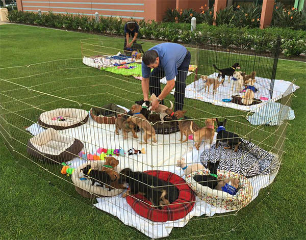"<div class=""meta image-caption""><div class=""origin-logo origin-image none""><span>none</span></div><span class=""caption-text"">Puppies play - and sleep - on the ABC7 studio lawn during our 2nd annual Puppypalooza Adoption Event on Tuesday, March 24, 2015. (KABC)</span></div>"