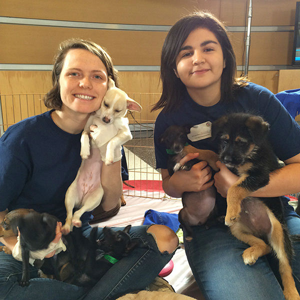 "<div class=""meta image-caption""><div class=""origin-logo origin-image none""><span>none</span></div><span class=""caption-text"">Shelter volunteers play with the pups at our 2nd annual Puppypalooza Adoption Event on Tuesday, March 24, 2015. (KABC)</span></div>"