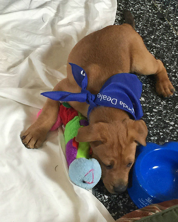 "<div class=""meta image-caption""><div class=""origin-logo origin-image none""><span>none</span></div><span class=""caption-text"">A puppy sleeps at our 2nd annual Puppypalooza Adoption Event on Tuesday, March 24, 2015. (KABC)</span></div>"