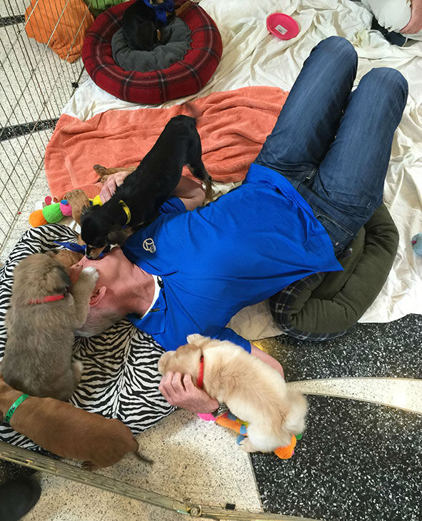 "<div class=""meta image-caption""><div class=""origin-logo origin-image none""><span>none</span></div><span class=""caption-text"">Garth gets some puppy love at our 2nd annual Puppypalooza Adoption Event on Tuesday, March 24, 2015. (KABC)</span></div>"