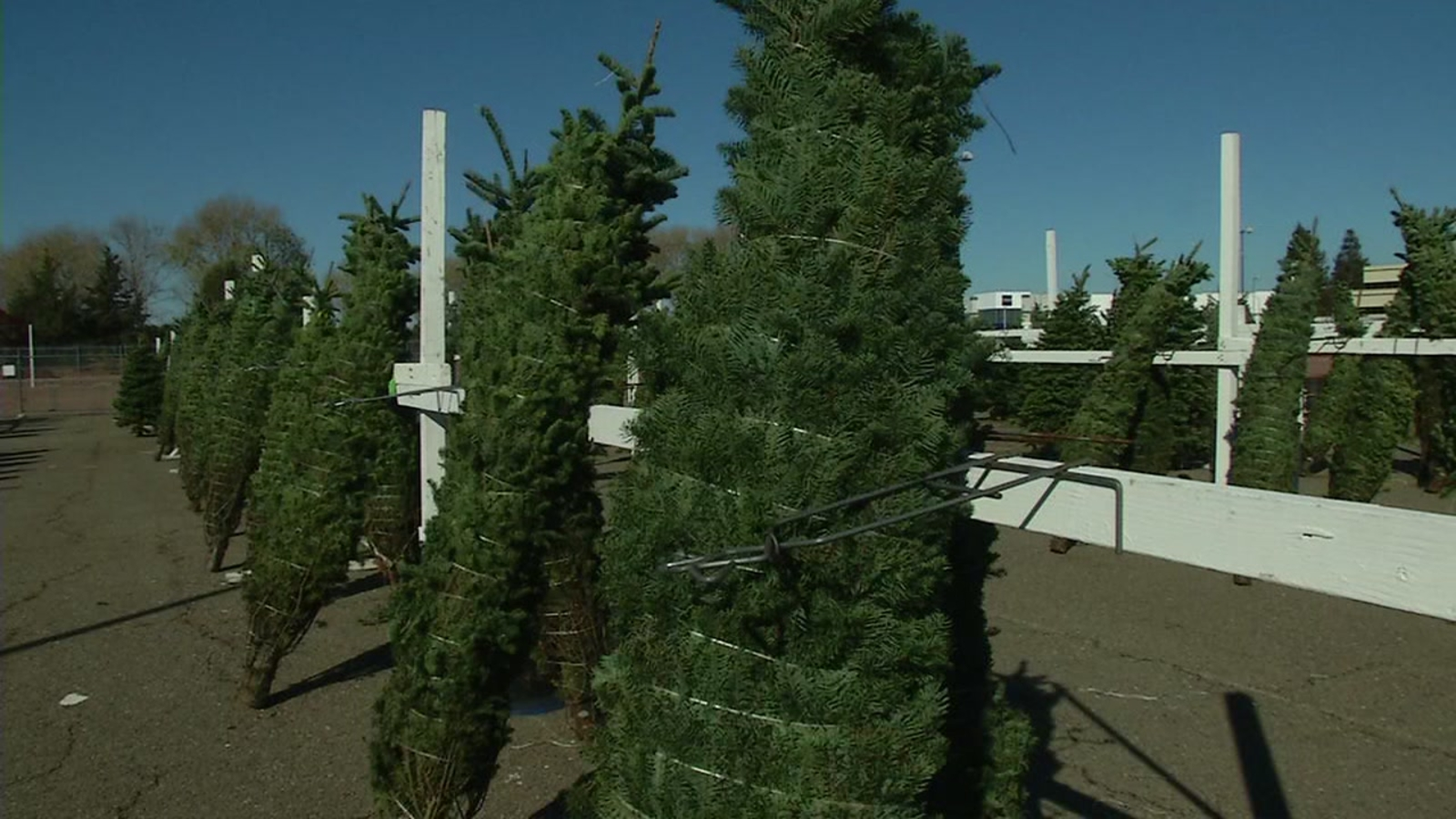Christmas tree shortage: Why it's