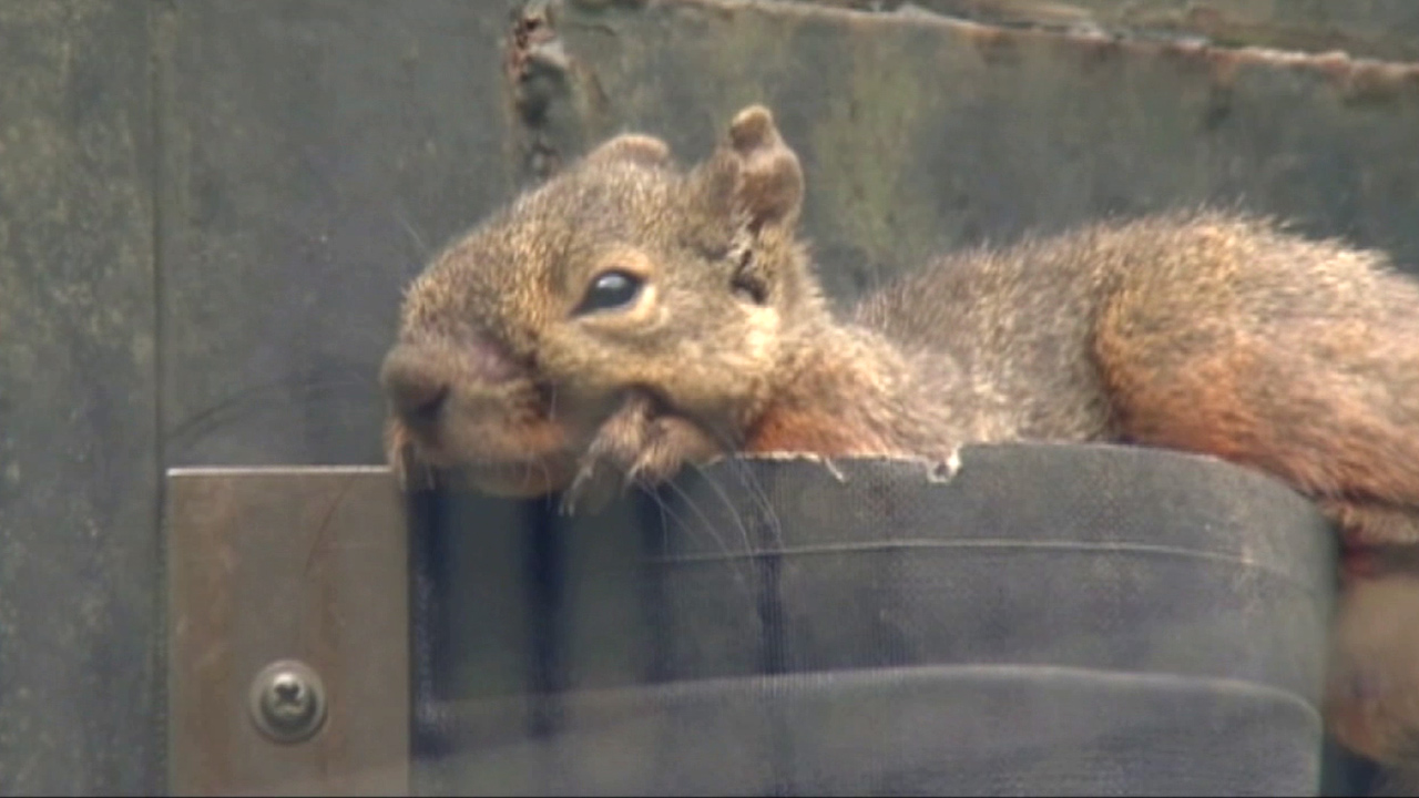 A squirrel is shown in this undated file photo.