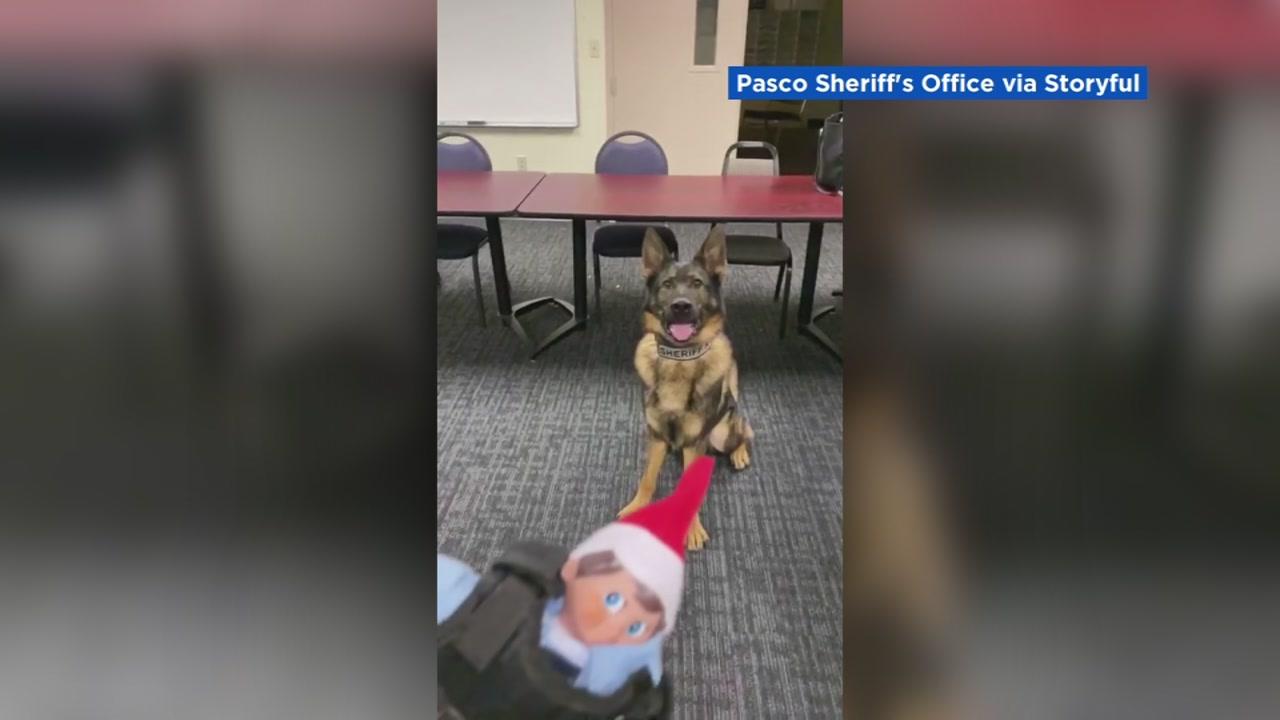 Deputy Dog S New Toy Elf On The Shelf