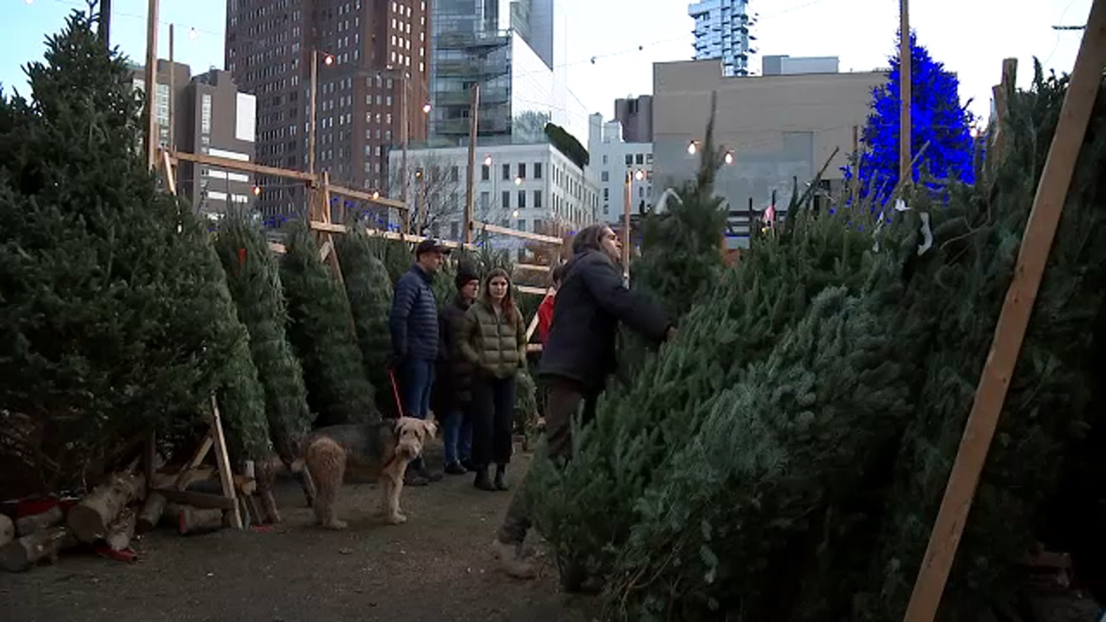 Tree vendor in SoHo selling 20-foot fir for $6,500