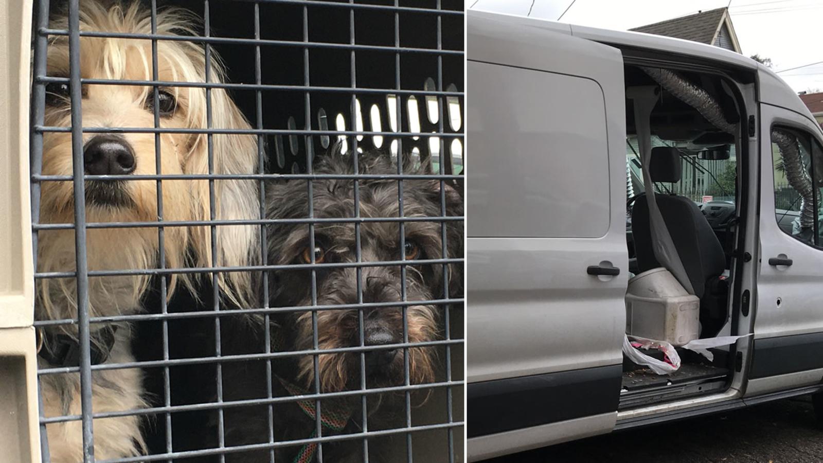Van stolen from Fremont 2 dozen dogs inside recovered in Oakland