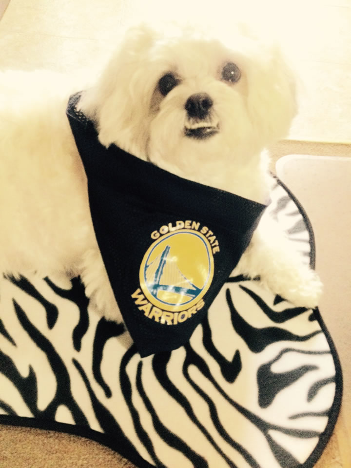 <div class='meta'><div class='origin-logo' data-origin='none'></div><span class='caption-text' data-credit='Photo submitted by Maria/uReport'>Bella is a big Golden State Warriors fan. Send your fan photos to uReport@kgo-tv.com!</span></div>