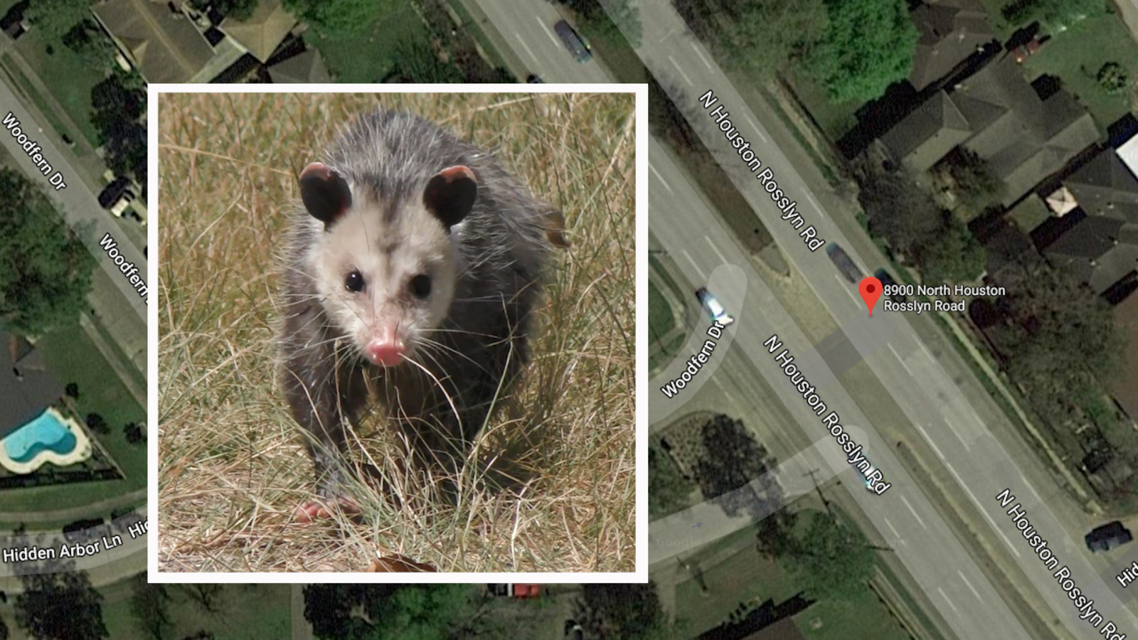 How To Get Rid Of A Possum In Your Garage intoxicated man hit and killed while trying to pick opossum up on side of  road