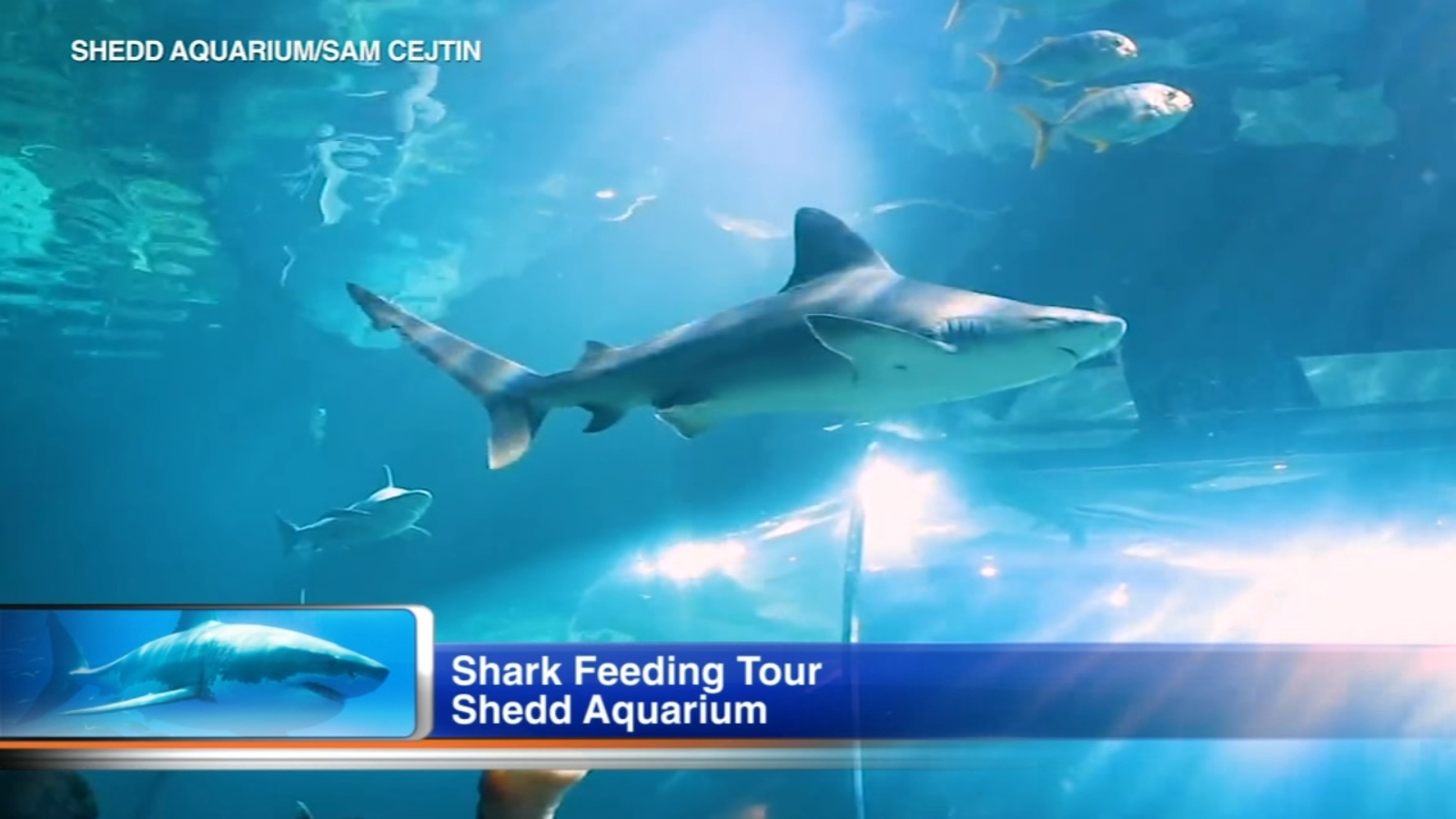 Escape the cold and feed sharks at Shedd Aquarium's Shark ...