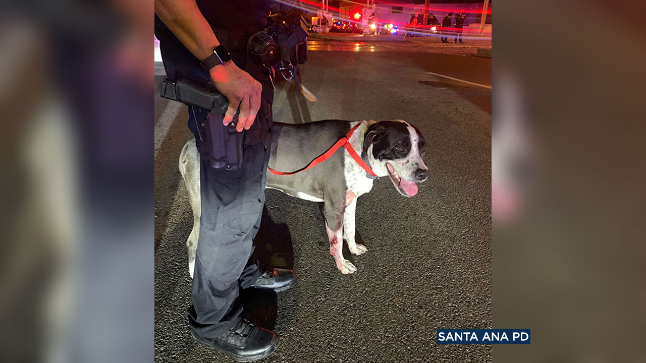 A dog survived when a car was struck on the train tracks in Santa Ana, but a person inside the vehicle was killed.