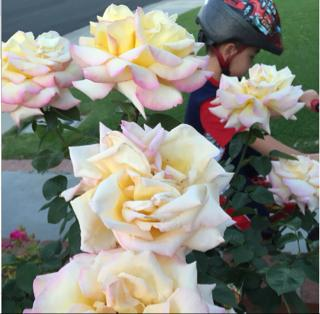 """<div class=""""meta image-caption""""><div class=""""origin-logo origin-image none""""><span>none</span></div><span class=""""caption-text"""">Spring has sprung in the Bay Area! Send photos of the springtime scenes in your neighborhood using #WhereYouLive or to uReport@kgo-tv.com. (Photo submitted by Twee Hayes/Facebook)</span></div>"""