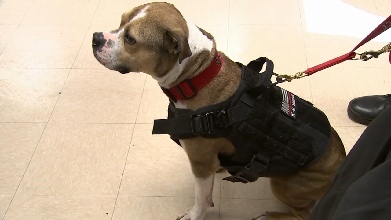 New Jersey pit bull makes history as first arson-detection K9 officer