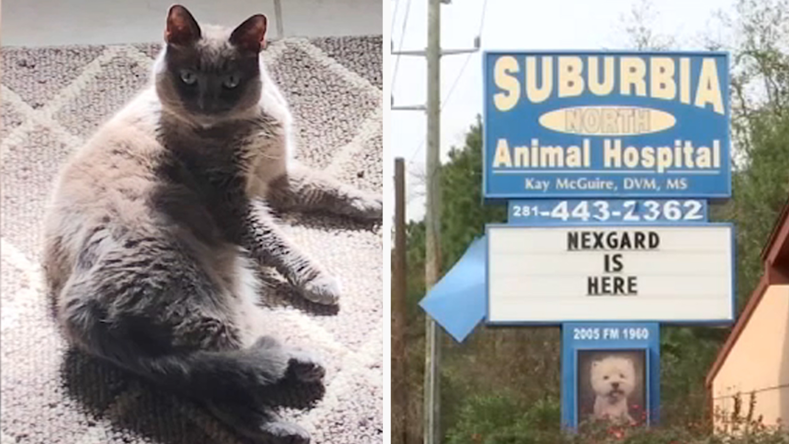 Animal hospital accidentally gives cat euthanasia instead of vaccine