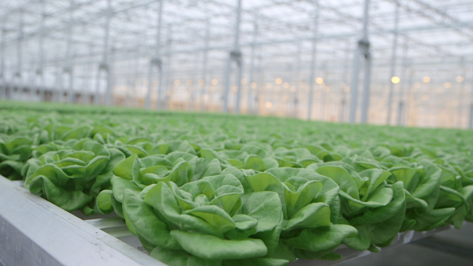 Massive Greenhouse Will Allow This City to Grow Produce Year-Round