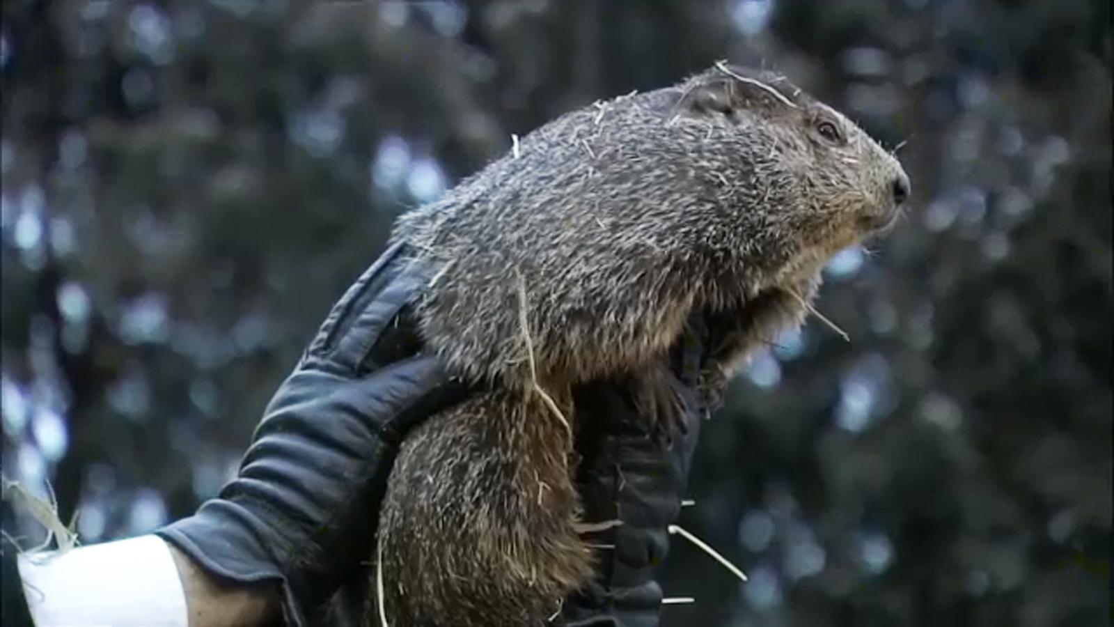PETA calls for retirement of Punxsutawney Phil, to be ...