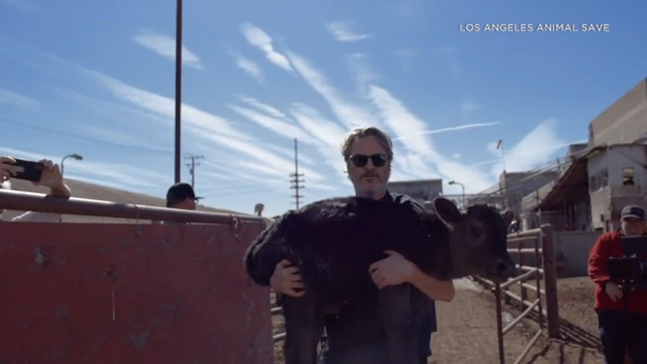 Joaquin Phoenix rescues cow, newborn calf from meat processing facility in Pico Rivera