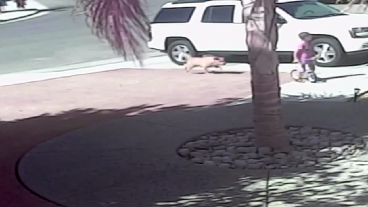 Cat saves little boy during dog attack.
