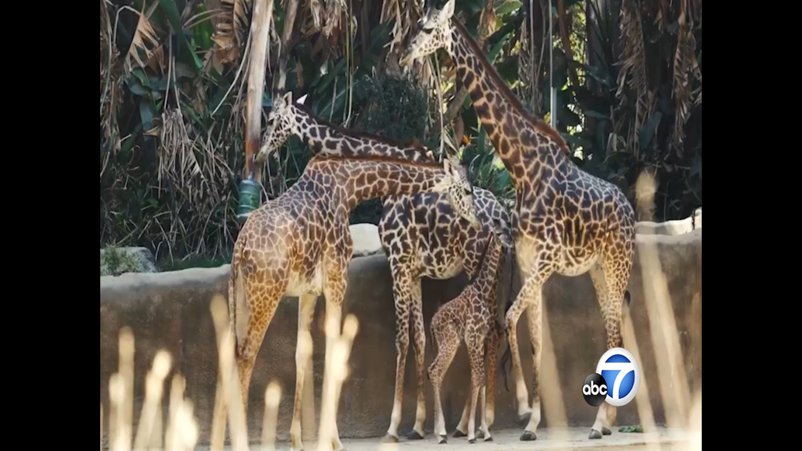 Animals at the LA Zoo are missing human visitors amid coronavirus outbreak