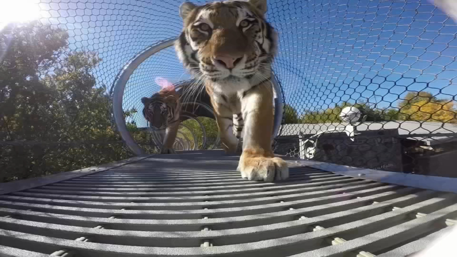 Philadelphia Zoo amplifies precautions after tiger tests positive for COVID-19 at Bronx Zoo