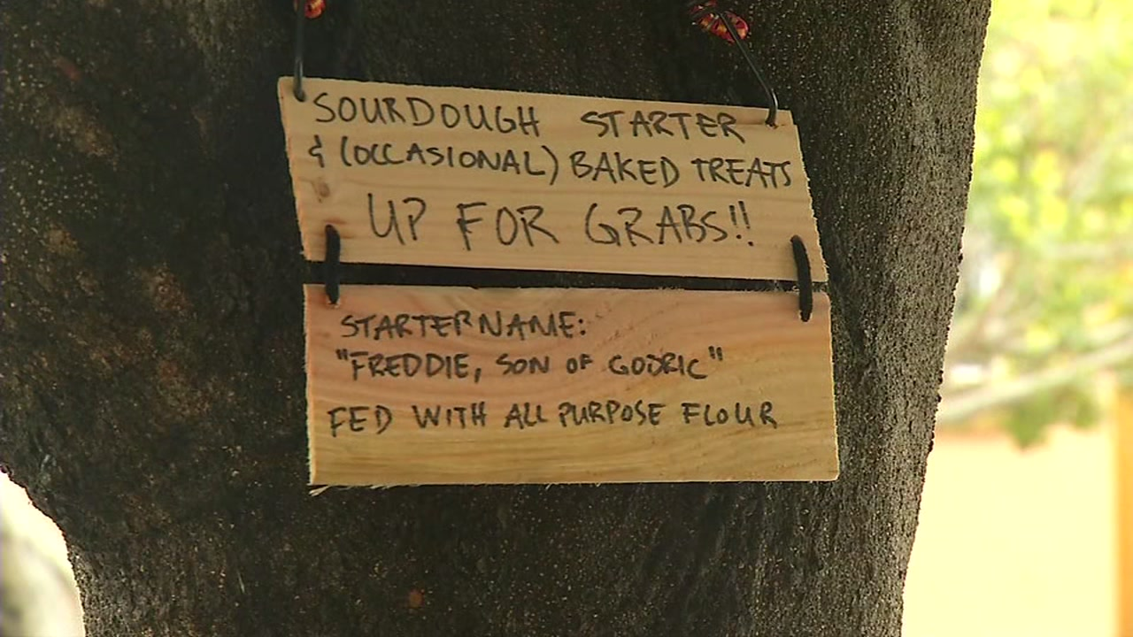 This image shows a sign offering free sourdough starter pinned to a pole in Bernal Heights, San Francisco on April 5, 2020.