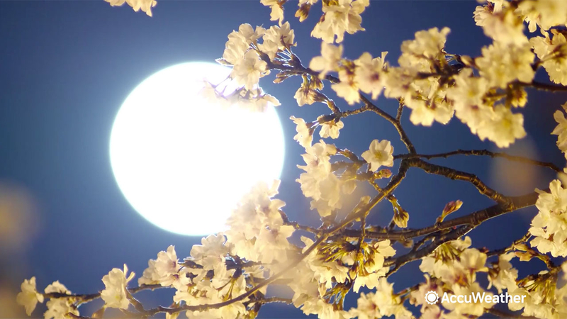 May 2020 supermoon: Flower moon, final supermoon of 2020, rises on ...