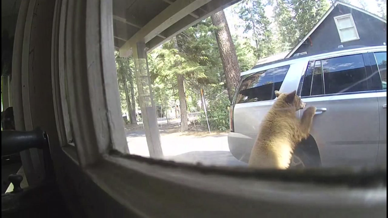 Tough lesson: Bear breaks into Bay Area family's car in Lake Tahoe, forages for food