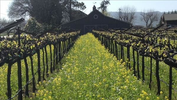 """<div class=""""meta image-caption""""><div class=""""origin-logo origin-image """"><span></span></div><span class=""""caption-text"""">Spring in Napa Valley (Photo submitted via uReport)</span></div>"""