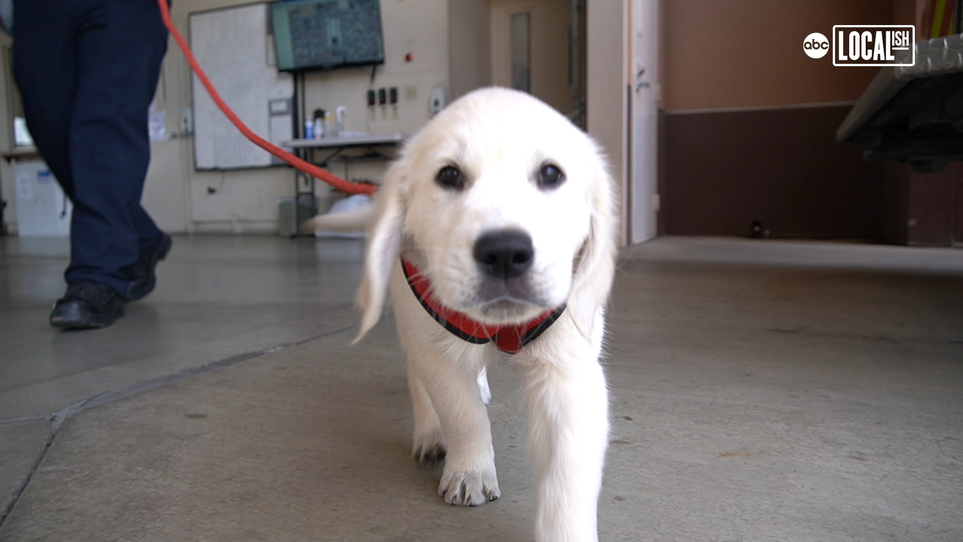 Puppies help firefighters cope with stress
