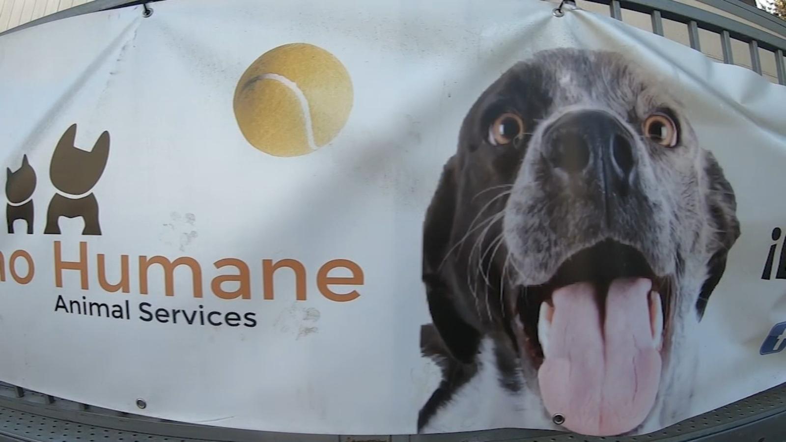 Fresno Humane turning to community, technology to return lost pets