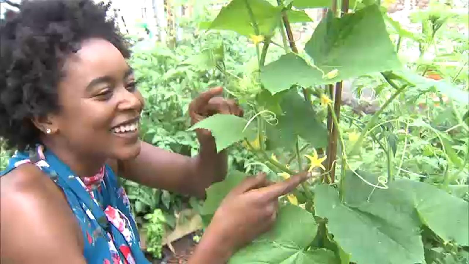 Coronavirus pandemic leads to new generation of plant, garden lovers