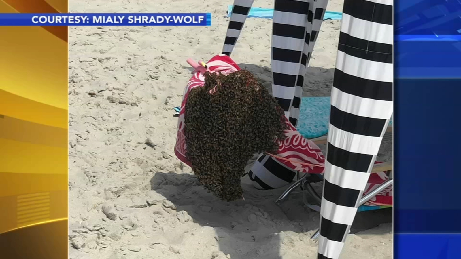 'It was just like this black cloud': Bees swarm beachgoers in Cape May, New Jersey