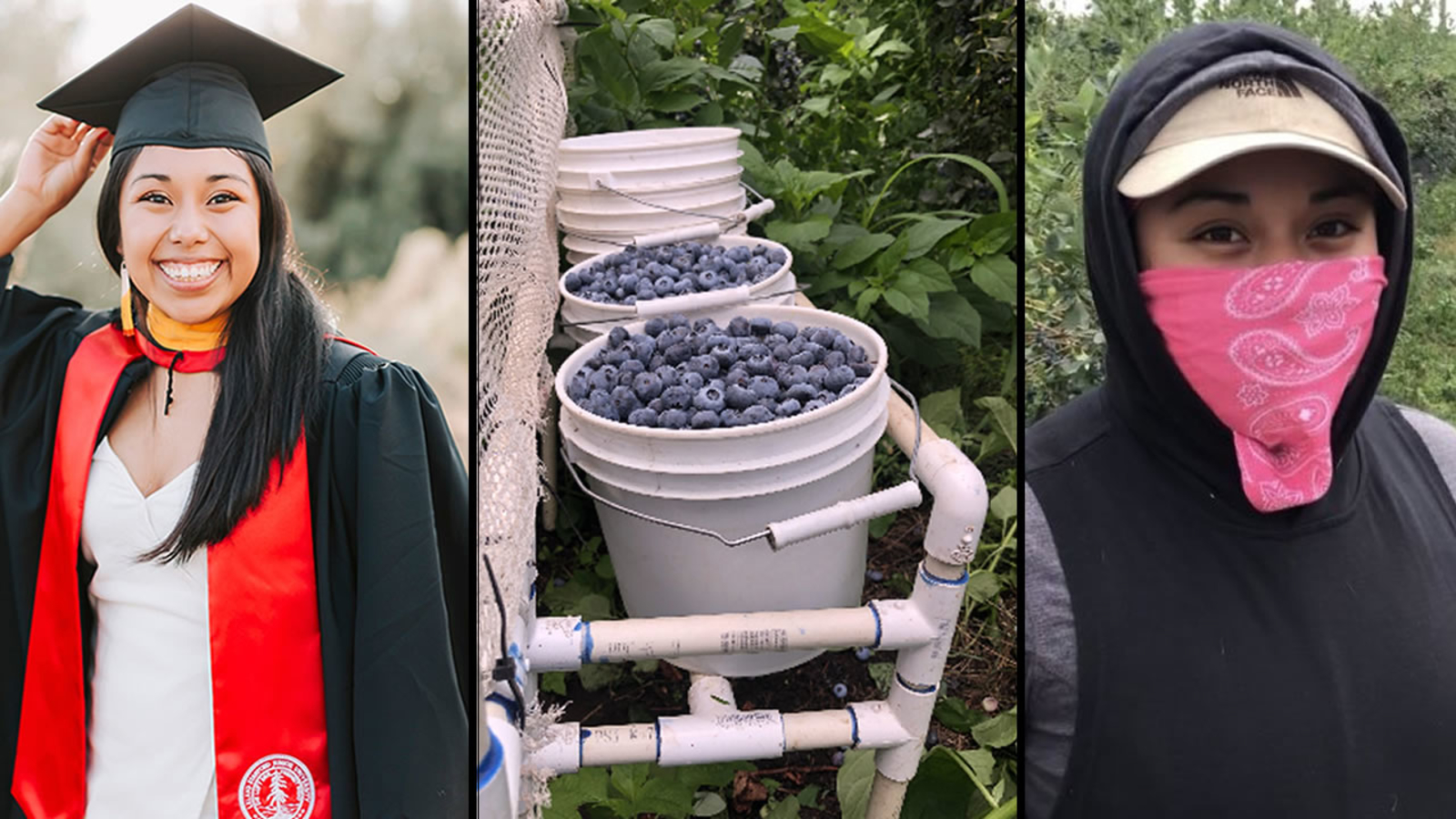 Stanford student raises awareness for farmworker wages after getting $7 for picking 2 gallons of blueberries