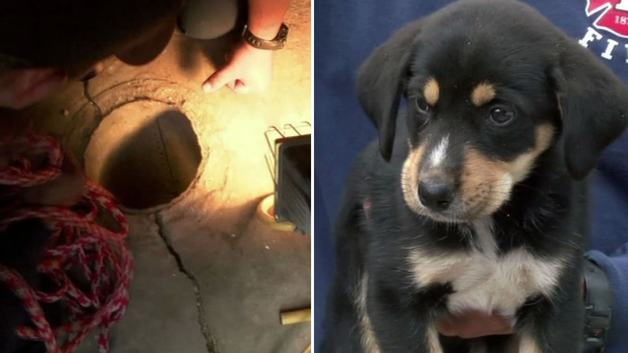 A German Shepard puppy named Timmy is recovering after falling 50 feet down a well.