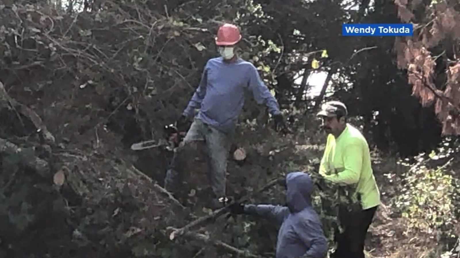 Oakland Hills residents hire company to cut down over 200 trees ahead of peak fire season