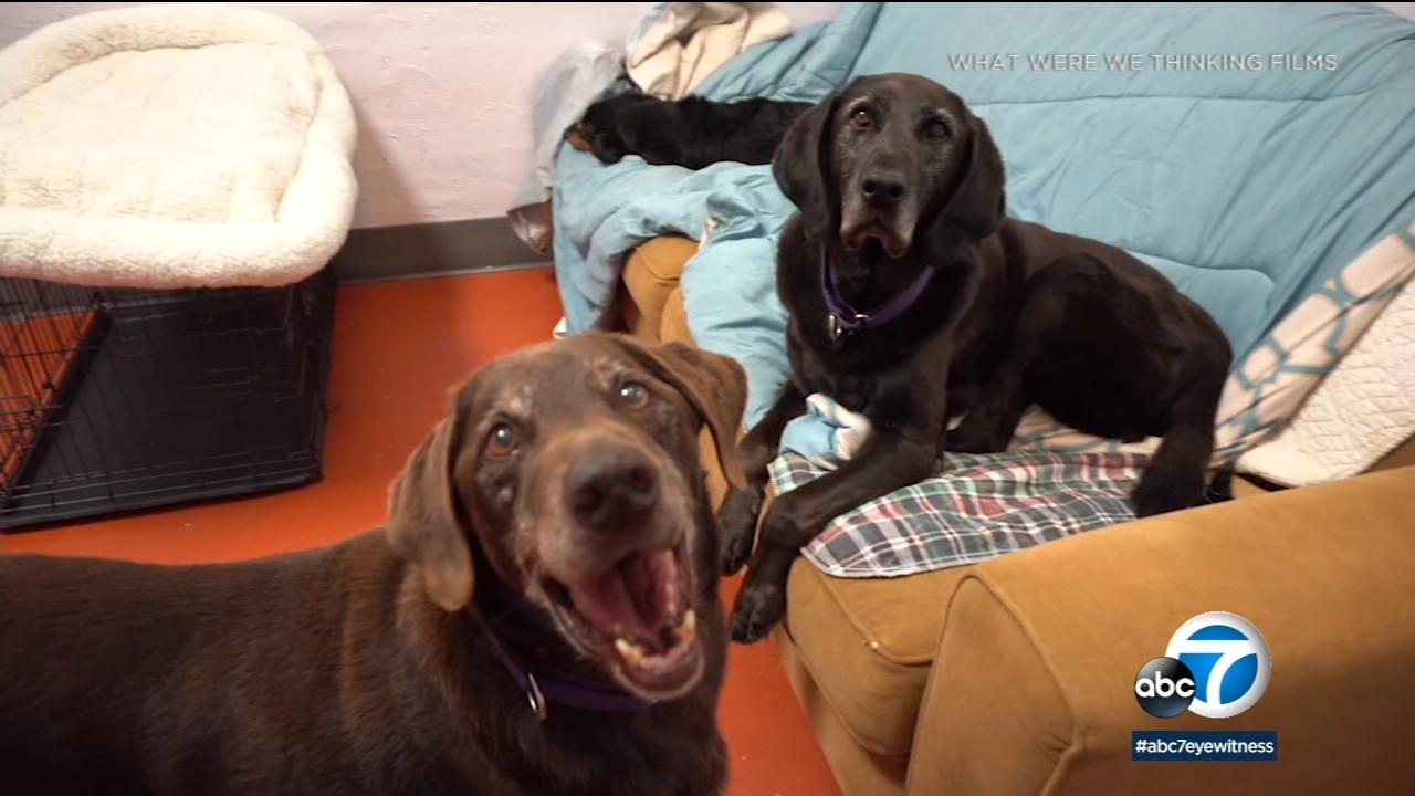 'Seniors: A Dogumentary' shines a light on senior dogs, encourages adoption