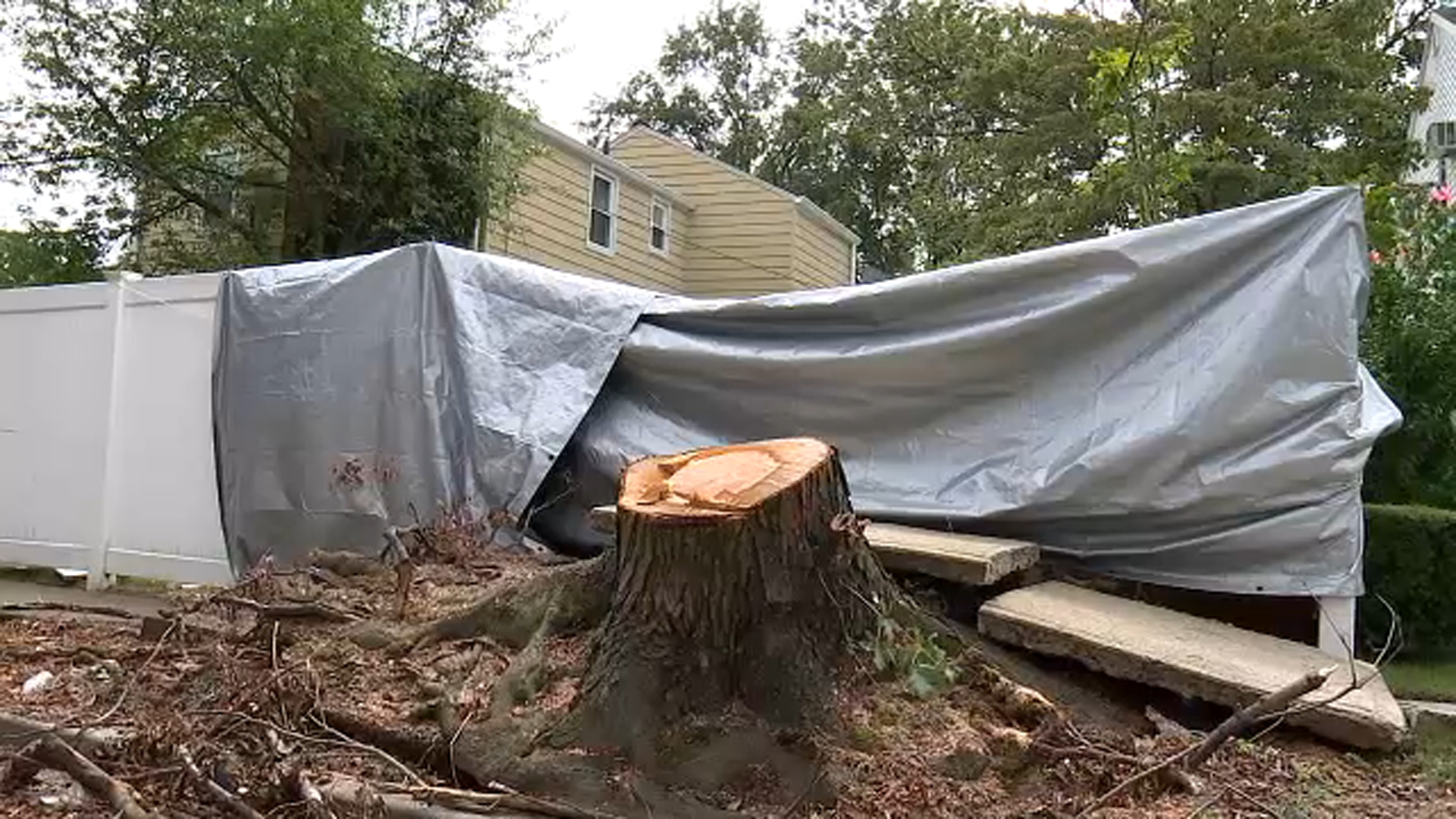 7 On Your Side Homeowner Stumped On How To Get Rid Of Uprooted Tree On Long Island Abc7 New York