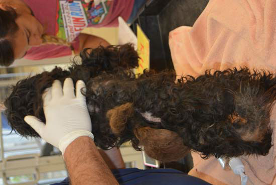 """<div class=""""meta image-caption""""><div class=""""origin-logo origin-image none""""><span>none</span></div><span class=""""caption-text"""">The Houston Humane Society seizes 20 dogs from two homes in Highlands on Tuesday, April 14. (Photo/Houston Humane Society)</span></div>"""
