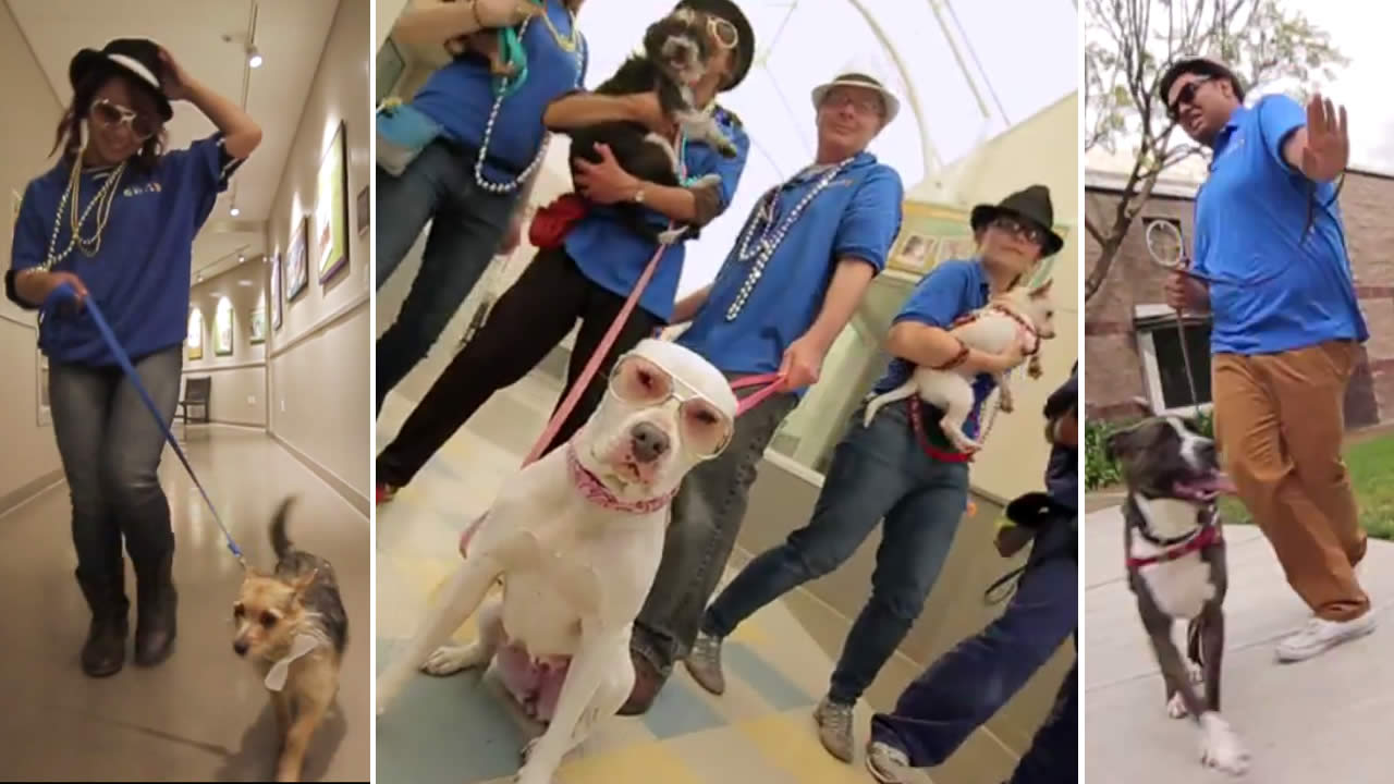 """The East Bay SPCA in Oakland, Calif. put together a fun parody of Bruno Mars' """"Uptown Funk"""" to promote pet adoptions."""