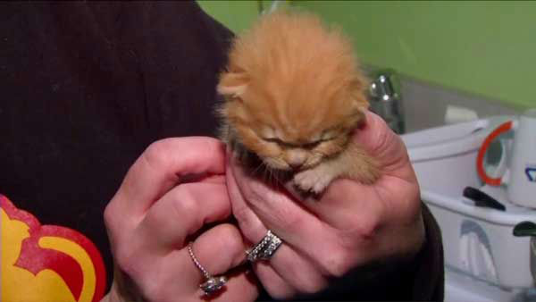 "<div class=""meta image-caption""><div class=""origin-logo origin-image none""><span>none</span></div><span class=""caption-text"">An Indiana family could soon have its kitten back, after being told it died in a fire. (WLS Photo)</span></div>"