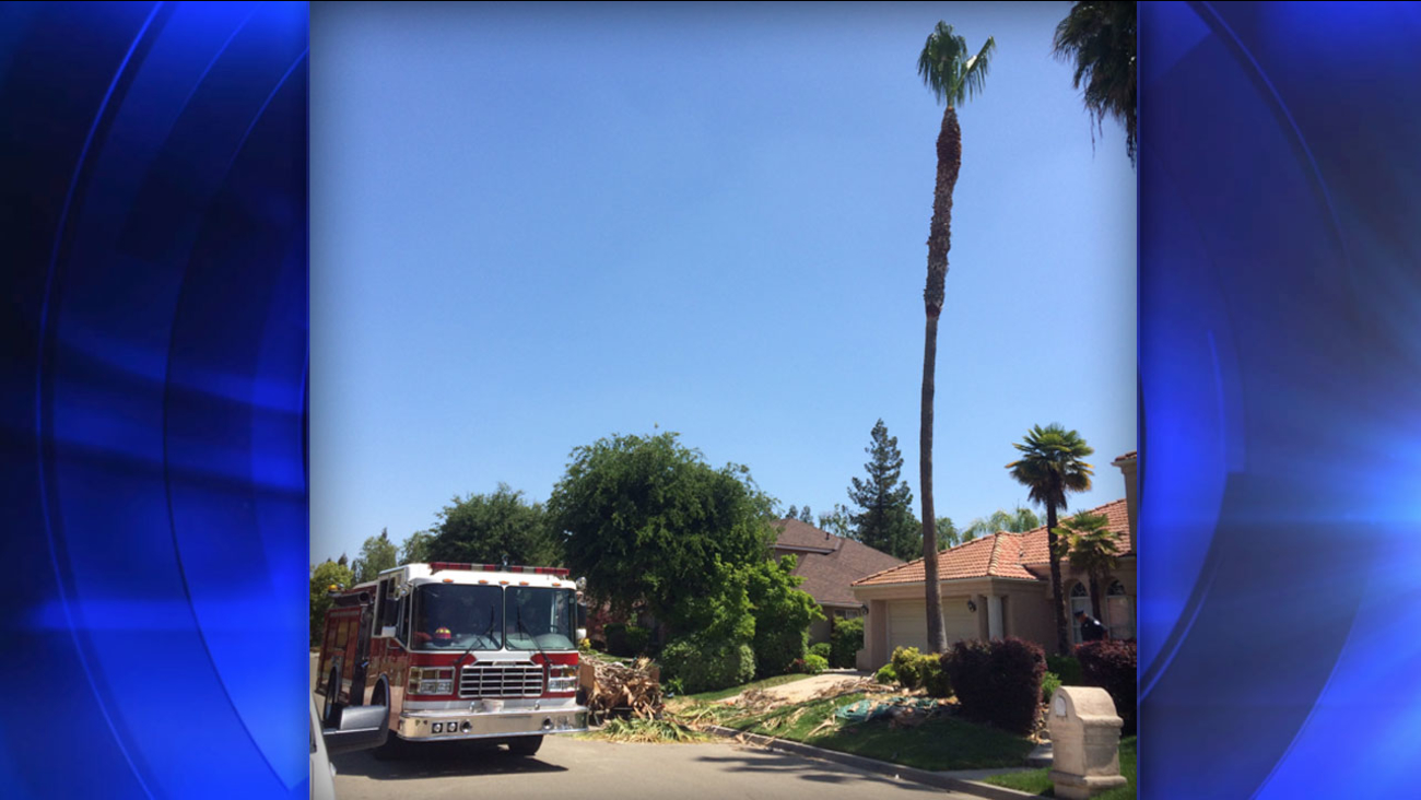 The Fresno Fire Department said a man was trimming a 40-foot palm tree when he accidentally cut his own safety line and fell to the ground.