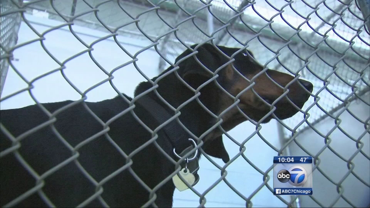 More than 35 dogs sick at Tinley Park PAWS