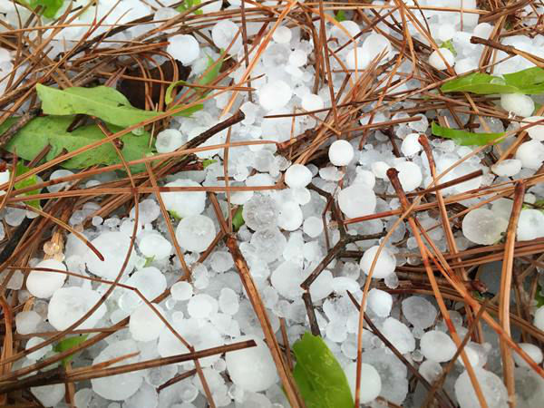 "<div class=""meta image-caption""><div class=""origin-logo origin-image none""><span>none</span></div><span class=""caption-text"">Hail photos sent in from Eyewitnesses (WTVD Photo)</span></div>"