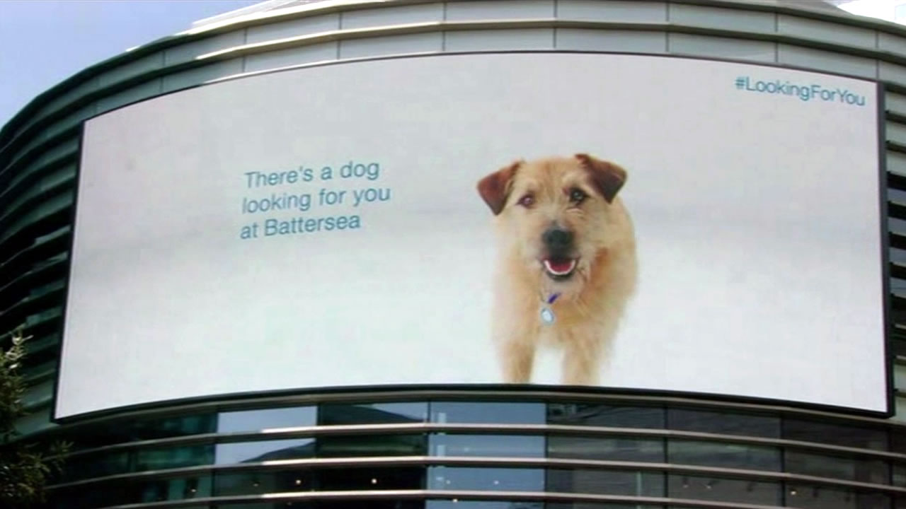 A digital billboard promotes pet adoptions for Battersea Dogs and Cats  at East London's Westfield Stratford mall in May 2015.