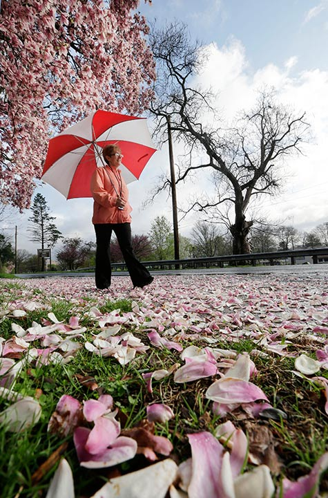 """<div class=""""meta image-caption""""><div class=""""origin-logo origin-image ap""""><span>AP</span></div><span class=""""caption-text"""">Cathy Lodato, of Hamilton, N.J., uses an umbrella to ward off rain water falling from trees, as the sun breaks through Tuesday, April 21, 2015, in Morrisville, Pa. (Mel Evans)</span></div>"""