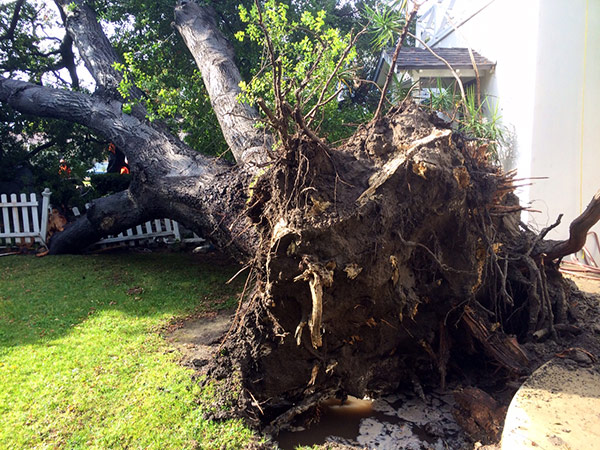 """<div class=""""meta image-caption""""><div class=""""origin-logo origin-image kabc""""><span>KABC</span></div><span class=""""caption-text"""">ABC7 reporter Marc Cota-Robles shared this photo of a fallen tree on Lemon Street in Anaheim on Friday, May 8, 2015. (ABC7 reporter Marc Cota-Robles)</span></div>"""